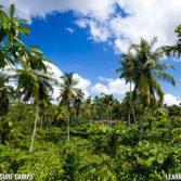 Tropical Jungle Views